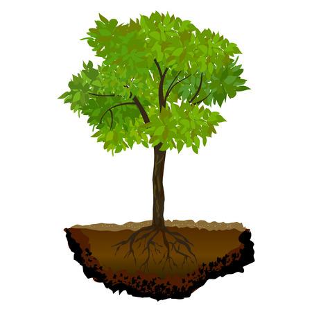 Baum wächst in der soil.vector Illustration