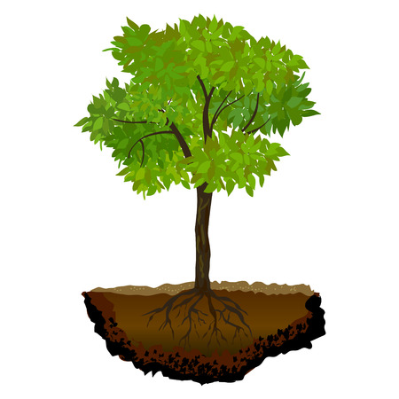 drawing trees: tree growing in the soil.vector illustration Illustration