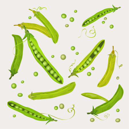 Green pea pods backgroud. vector illustration