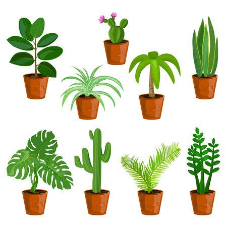 Potted flowers, isolated. vector illustration