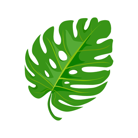 bright tropical leaf isolated on white background. vector illustration