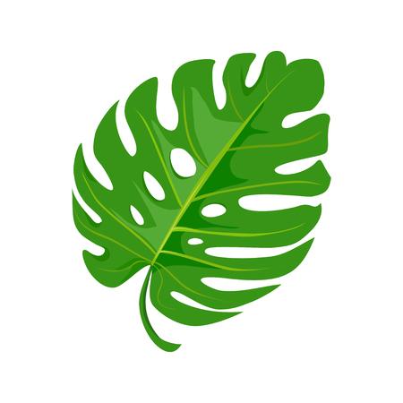 helle tropische Blatt isoliert auf weißem Hintergrund. Vektor-Illustration