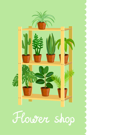 House plants. flower shop. vector illustration
