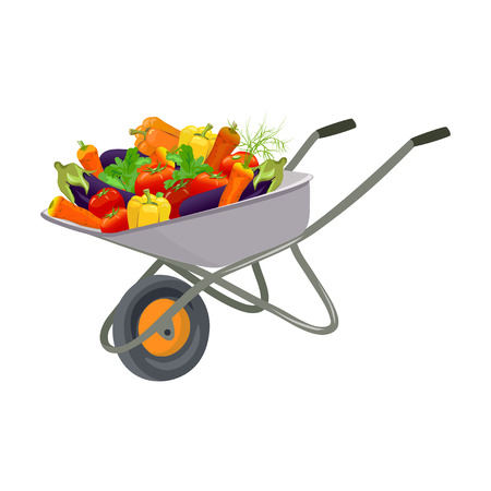 Garden trolley with the harvest of vegetables. vector illustration Illustration