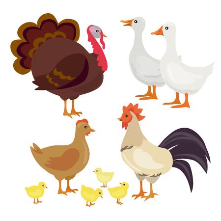 farm birds, isolated. vector illustration
