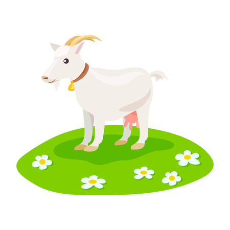 goat on green meadow isolated. vector illustration