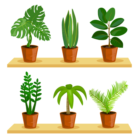 potted plants, isolated. vector illustration