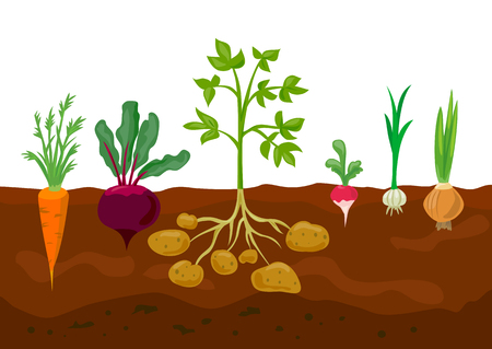set of different vegetables in the ground. vector illustartion Çizim