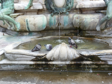 Pigeons bathing in a city fountain photo