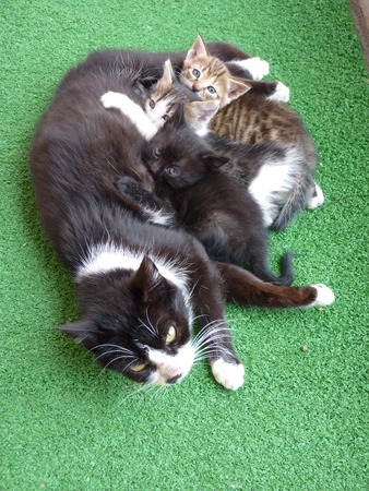 instinct: A cats family with three kittens