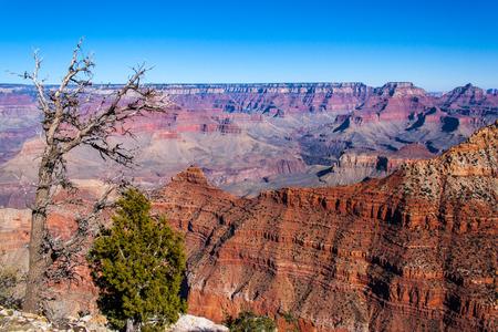 albero secco: Grand Canyon cespuglio verde e albero secco