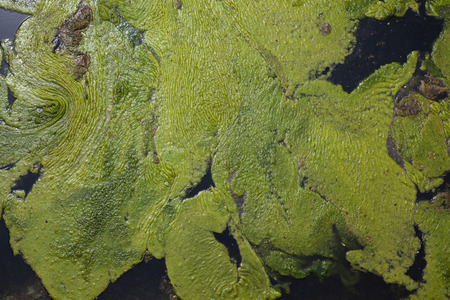 slime: Background green slime on the dark water Stock Photo