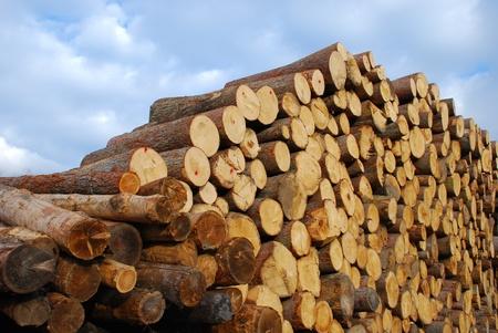 forestry industry: Pile of log - Dolomites (Dolomiti, Italy)