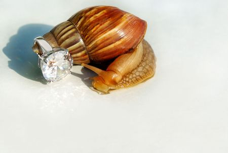limpid: big brown snail holding beautiful ring with large limpid crystal  Stock Photo