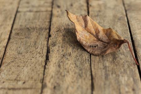 dry leaf: Dry leaf on a wood floor
