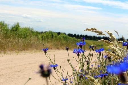 Wilde bloemen op een landelijke weg. Kruisbloemen op de weg