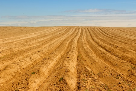 Een nieuw geploegd veld dat tot oneindig loopt met een heldere blauwe hemel