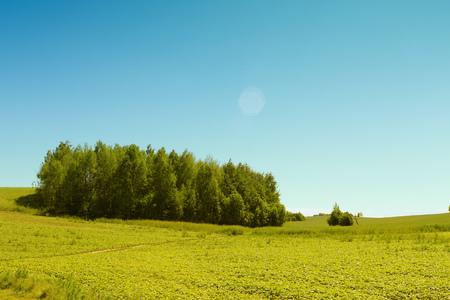 Het kleine eiland bomen in pure weide