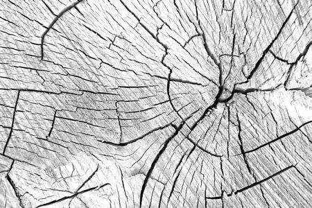 Achtergrond van de gesneden bomen