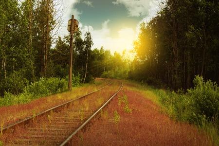 Verlaten spoorweg in het overgroeide gebied Stockfoto