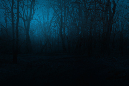 Spooky foggy mountain forest at night