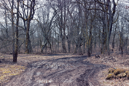Vuile onbegaanbare weg in het bos