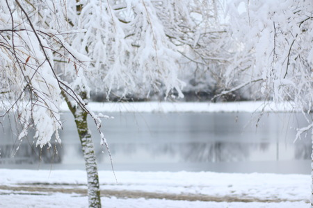 Snowy tree in front of a frozen river