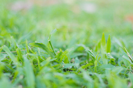 breezy: Lawn with green leaves Stock Photo