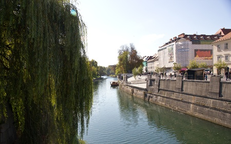 Buildings facing the river in ljubljana with weeping willows on the banks