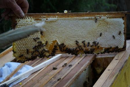 The beekeeper in the field of flowers. brown