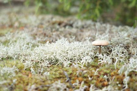 fungi: blur small mushroom on green grass garden in morning light