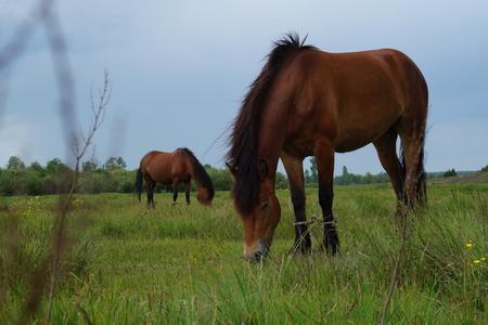 Beautiful sunrise landscape. Horse and foal on mountain pasture Stock Photo
