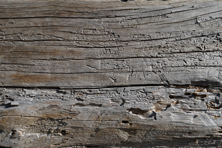 timber floor: old wood texture background, plank, panel, timber wall floor