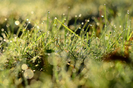 Water drops on the green grass Shallow Dof .
