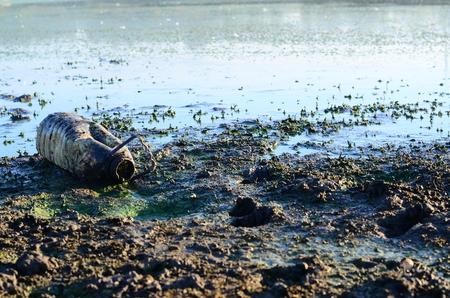 mundo contaminado: llantas abandonadas en el lago de Varese