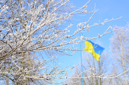Ukraine flag on a background of trees covered with frost.