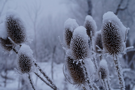 covered fields: winter snow plant thorn Stock Photo