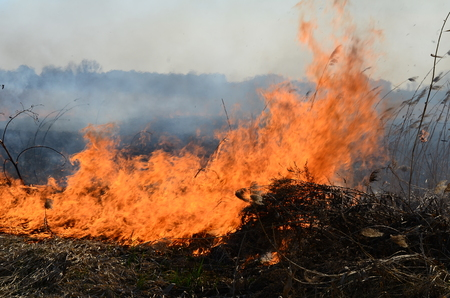 nebraska: Cleaning the fields of the reeds and dry grass. Natural disaster. Burning dry grass Stock Photo
