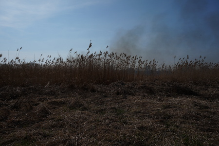 leidenschaft: Cleaning the fields of the reeds and dry grass. Natural disaster. Burning dry grass and reeds