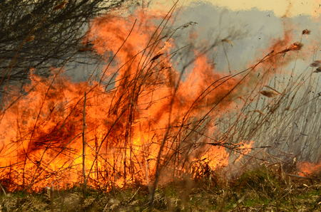 coastal zone of marsh creek, strong smoke from fire of liana overgrowth. Spring fires of dry reeds dangerously approach houses of village by river Cleaning fields of reeds, dry grass. Natural disaster.