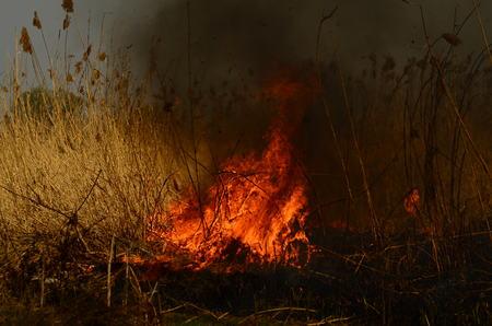 fire burn grass.
