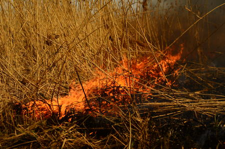 fire burn grass.