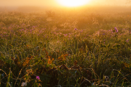 meadow in the morning with dew drops.