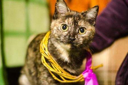 Cat thai animal portrait