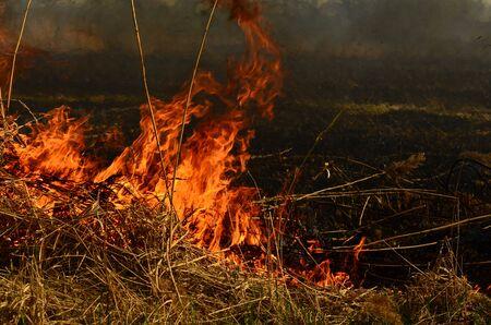 fire burn grass. Stock Photo - 125460744