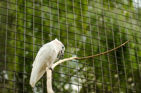 beautiful white parrot in a cage. Zdjęcie Seryjne