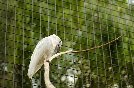 beautiful white parrot in a cage. Stockfoto