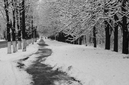 neige paysage hiver couvert bois frost vue