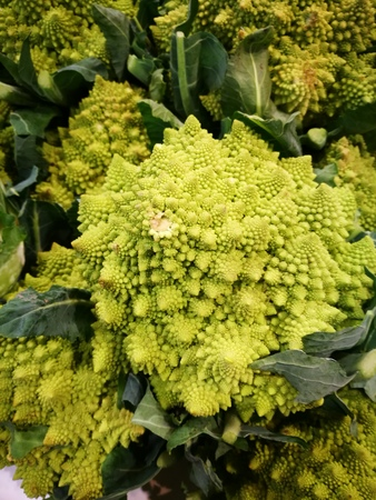 romanesco: Freshly picked Romanesco broccoli or Roman cauliflower stacked in a pile for sale at a farmers market.