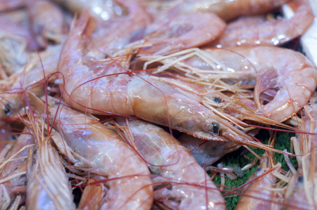 Close up of fresh whole raw shrimp or prawns on display in fish market Stock Photo